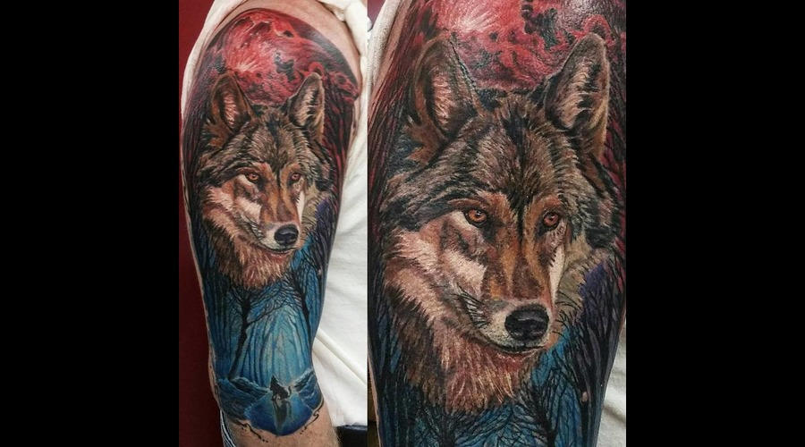 Realism  Realistic  Colour Realism  Animal  Forest  Wolf  Portrait Abstract Color Arm