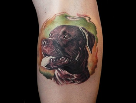 Dog Portrait Pitbull Color Lower Leg