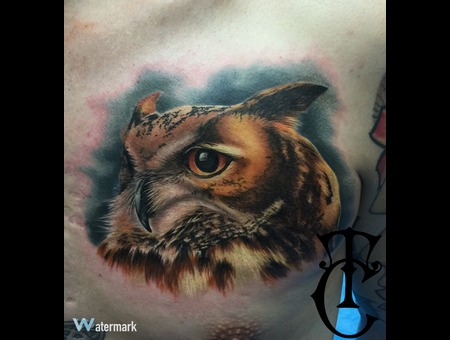 Owl Bird Realistic Color Chest