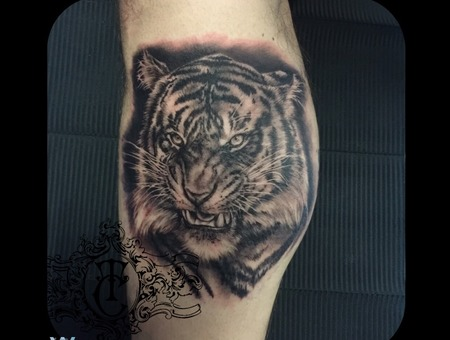 Tiger Animal Realistic Cat Black Grey Lower Leg