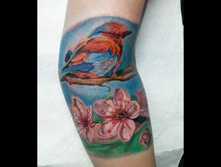 Bird  Cherry Blossoms  Flowers  Realism  Colour Realism  Color Realistic    Color Arm