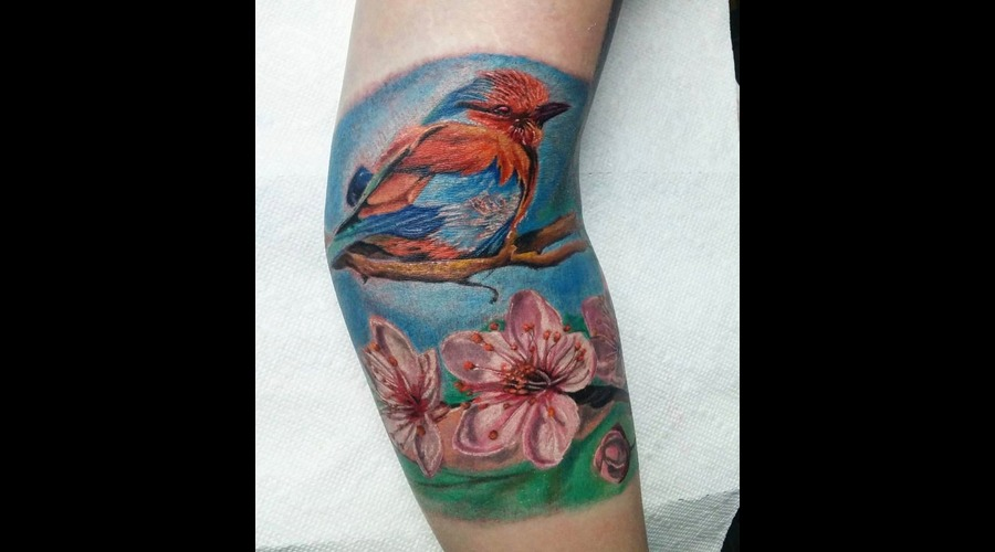 Bird  Cherry Blossoms  Flowers  Realism  Colour Realism  Color Realistic    Color Arm