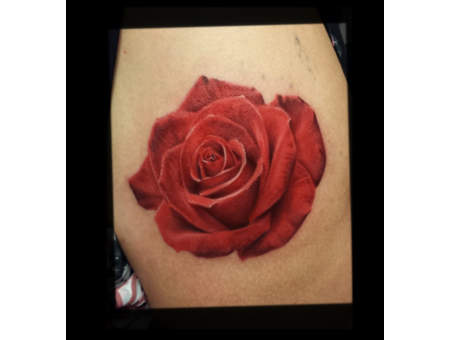 Color  Rose  Flower  Realism  Colorful Color Arm