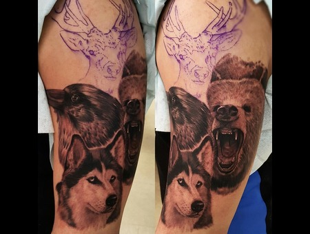 Animals  Bear  Raven  Wolf Black Grey Arm