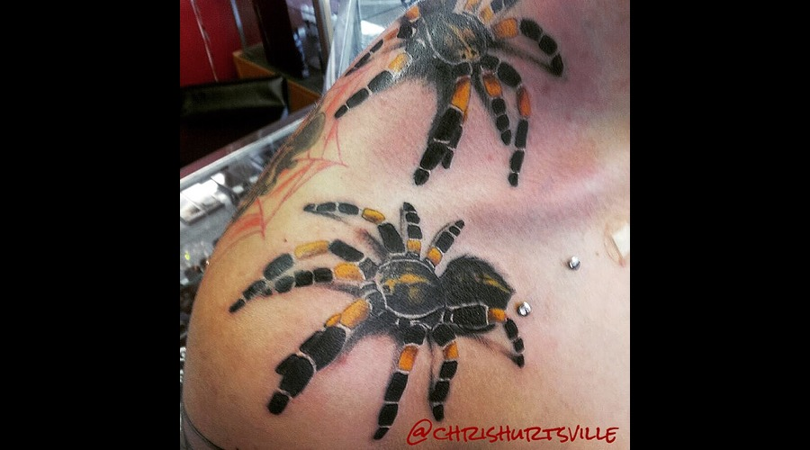Tarantula  Spider    Color Shoulder