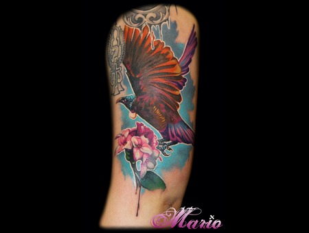 Tui Color Shoulder