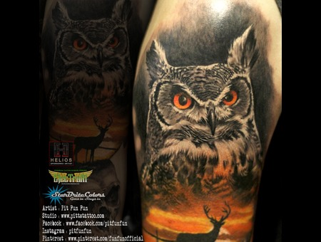 Closed Up Image Of The Realistic Owl By Pit Fun Color Arm
