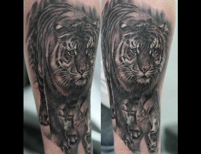 Portrait  Realistic  Tiger