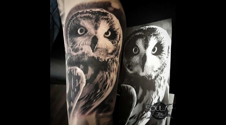Owl Bird Black Grey Arm