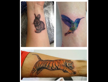 Animals Tiger  Hummingbird  Rabbit  Color Arm