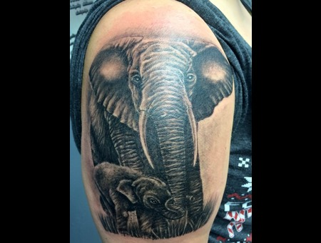Elephant Mother Son Animal Portrait Trunk Tusk Wildlife Circus Love Sexy Black Grey Shoulder