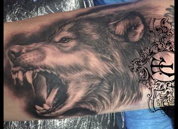 Animal,wolf,realistic
