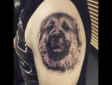 Dog Portrait Black Grey Shoulder