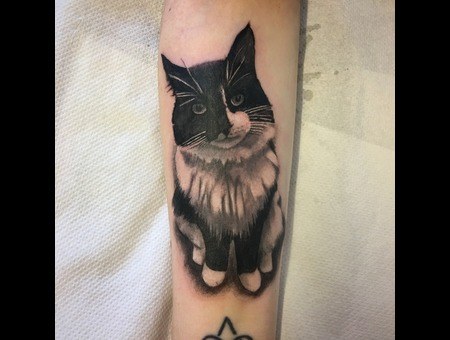 Cat  Portrait Black Grey Arm