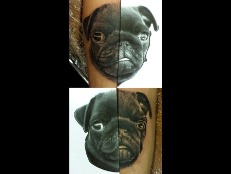 Dog  Dog Portrait  Pug  Animal Black Grey Forearm