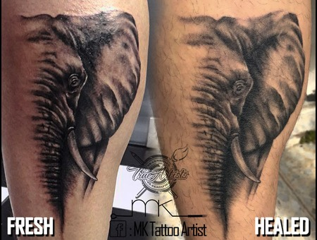 Realistic  Elephant  Portrait  Fresh  Healed Black Grey Lower Leg