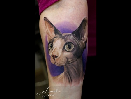 Cat  Sphynx  Sphinx  Color Forearm