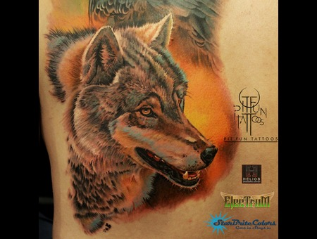Realistic Wolf Color Portrait  Color Back