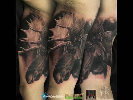 Moose   Portrait Tattoo  Black Grey Arm