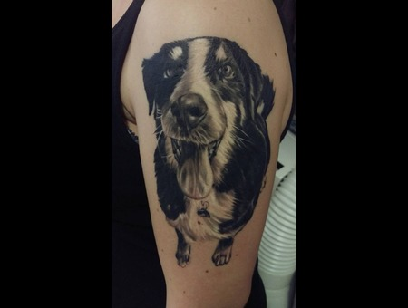 Dog Black Grey Arm