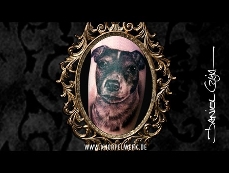 Pet  Dog  Dog Portrait  Memory  Black&Gray  Pet Love  Animal Black Grey Arm