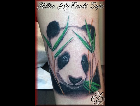 Panda  Panda Bear  Bear  Animal Black Grey Lower Leg