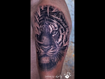 Tiger  Realism  Realistic  Black Grey Arm