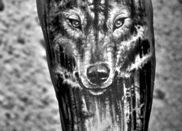 wolf, forest, wild, realistic