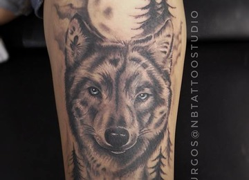 Wolf, Black and Gray wolf