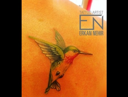 Colored Hummingbird Color Back