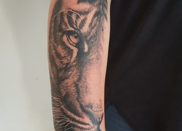 Tiger, cat, wildlife, animal, realism, realistic