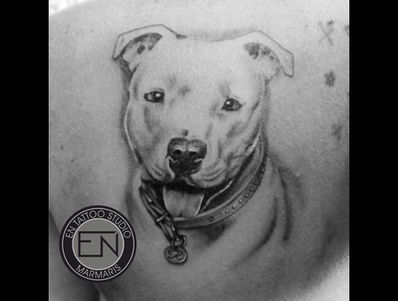 Dog  Pitbull  Portrait  Realism  Tattoos  Erkan  Nehir  Marmaris Black Grey Back