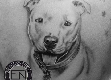 dog, pitbull, portrait, realism, tattoos, erkan, nehir, marmaris