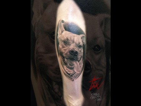 Dog Portrait Tattoo Amstaf Realistic Black And Grey Tattoo Portrait Black Grey Lower Leg