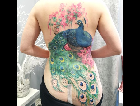 Peacock  Colors  Realism  Color Back