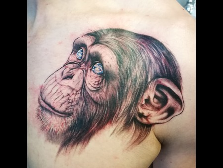 Realism  Chimpanzee  Chimp  Eyes  Galaxyeyes Color Chest