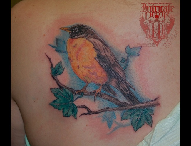 Bird  Robin Color Back