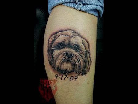 Dog  Puppy Black White Lower Leg