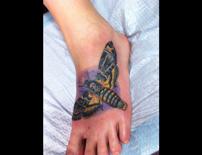Color  Deathhead  Moth  Foot Color