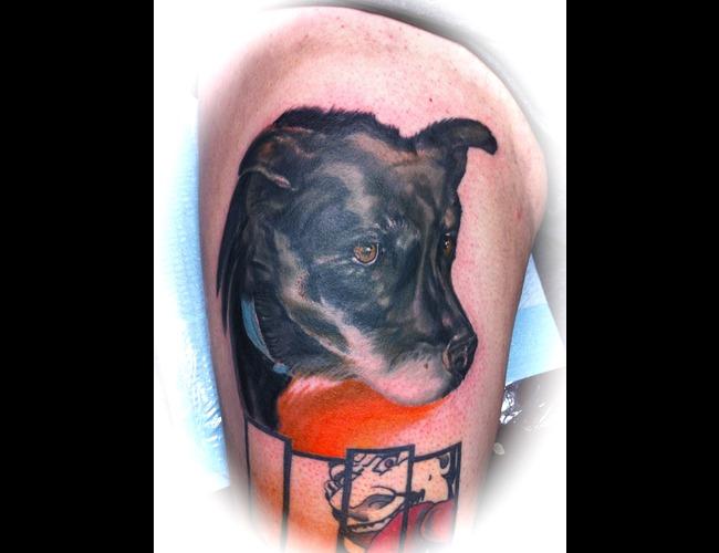 Dog  Portrait  Color Color