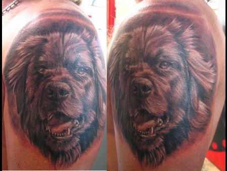 Dog  Portrait Black White Arm