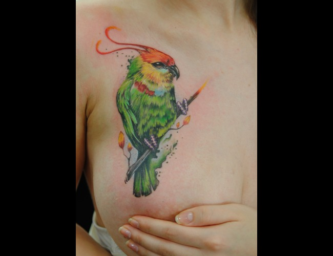 Bird  Breast Color