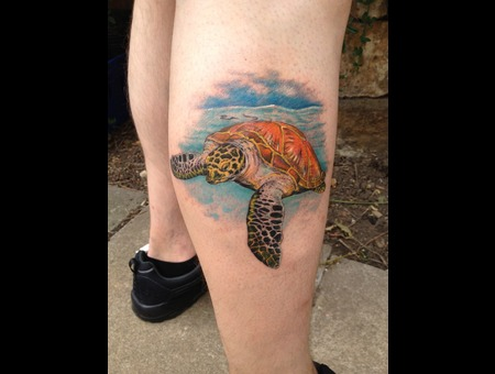 Realism  Turtle  Sea Color