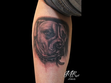 Portrait Dog Animal Black White Lower Leg