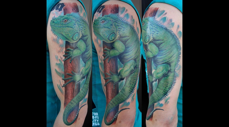 Lizard   Color
