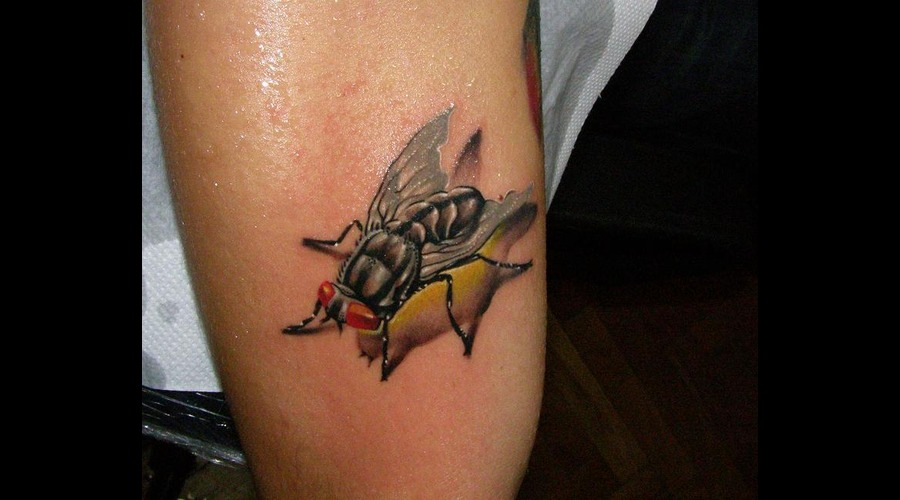 Fly Tattoo Color