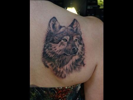 Wolf  Wild  Realism Black White