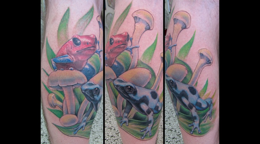 Poison  Dart  Frogs  Mushroom  Realism Color