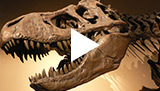 Does the Fossil Record Support Evolution?