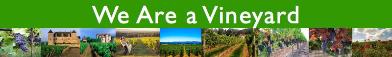 John 15 - We are a vineyard